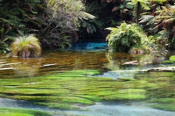 水源:ブルースプリング